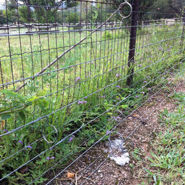 electric_fence_19