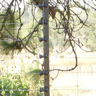 electric_fence_105